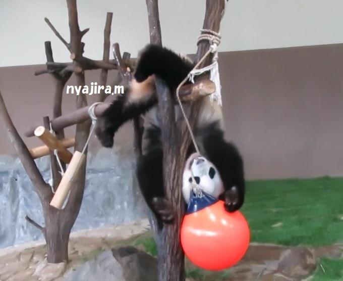 アドベン・ほぼパンダ(≧▽≦)_f0002743_2224426.jpg