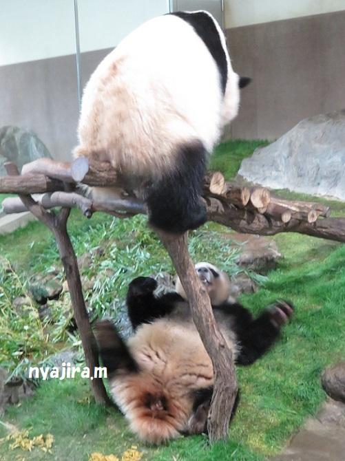アドベン・ほぼパンダ(≧▽≦)_f0002743_2244925.jpg