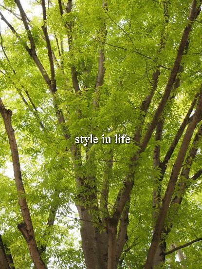 新緑の奈良へ_b0150155_21414052.jpg
