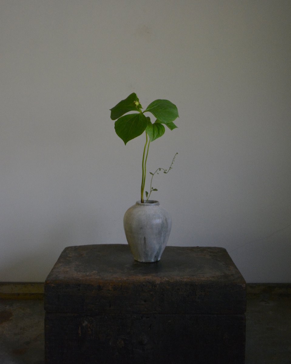 「長谷川奈津展 林檎の花」 7日目_d0087761_15213082.jpg