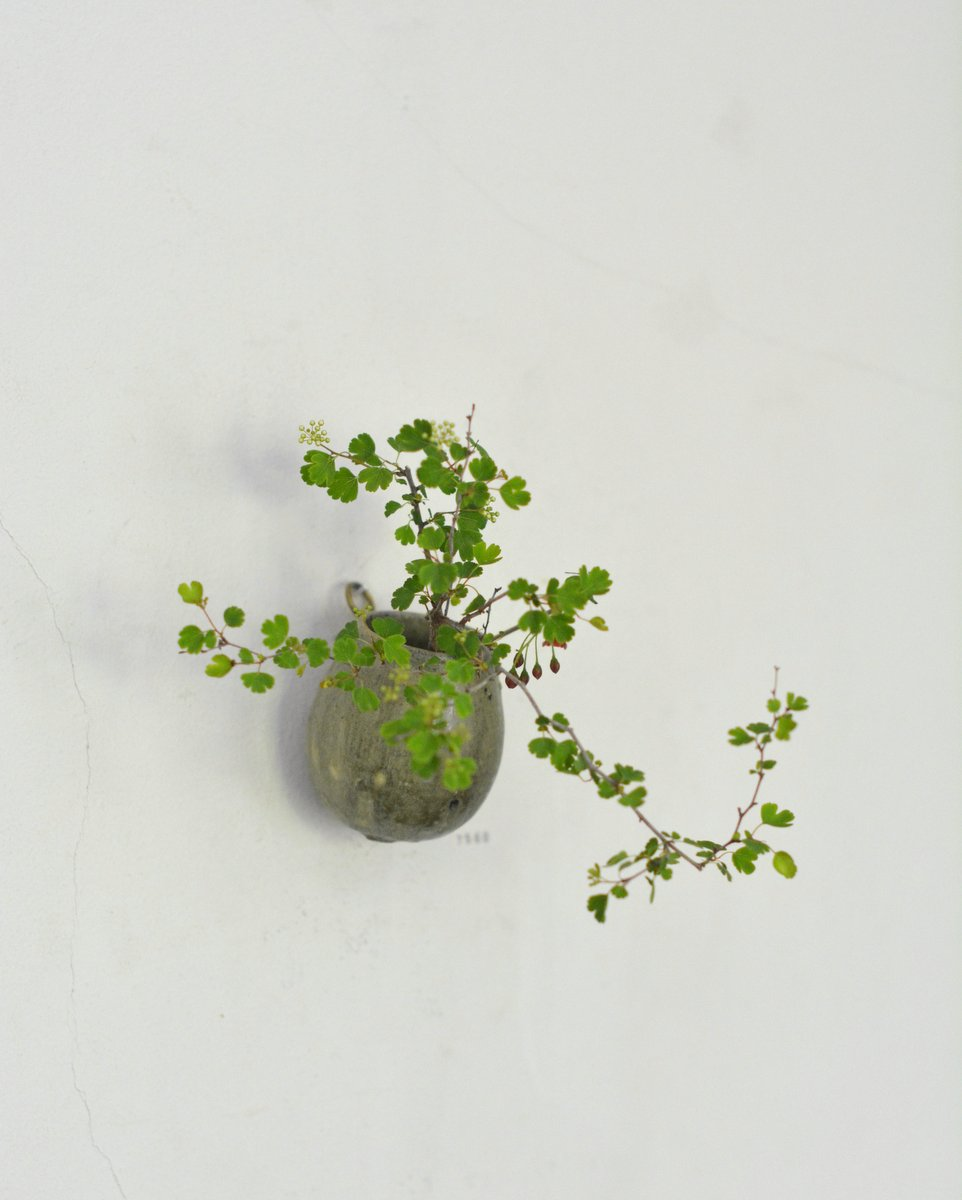「長谷川奈津展 林檎の花」 7日目_d0087761_152238.jpg