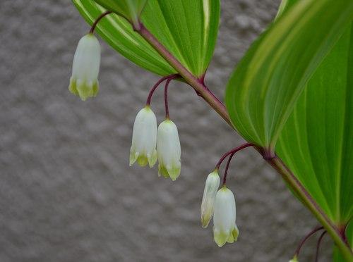 雨中に咲く_b0102572_11233661.jpg