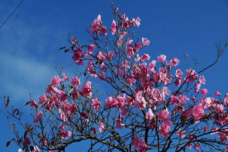 花いろいろ_d0162994_08230273.jpg