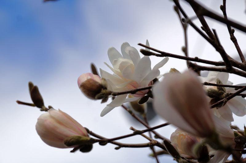 花いろいろ_d0162994_08232222.jpg