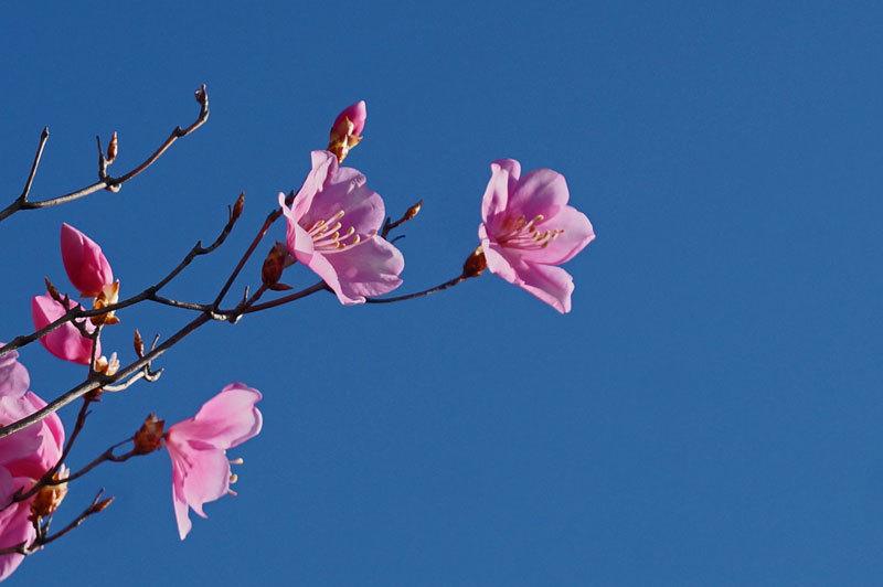 花いろいろ_d0162994_08234231.jpg