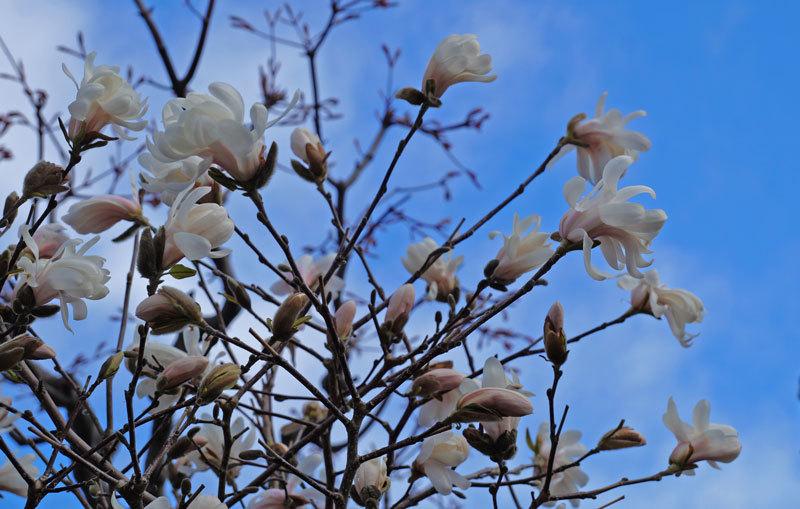 花いろいろ_d0162994_08235506.jpg