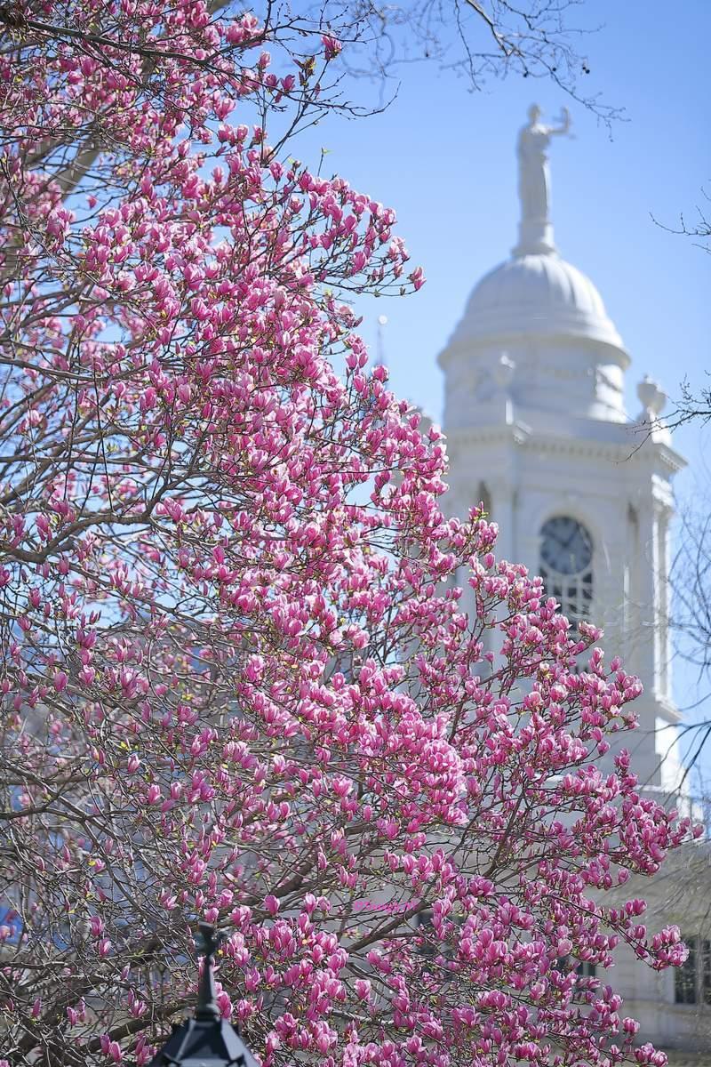 春のとまり_a0274805_09231562.jpg