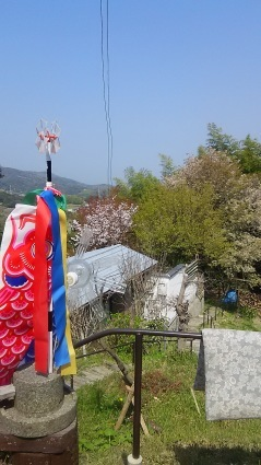 竹の子堀体験楽しいよ~❤_c0280108_06044824.jpg