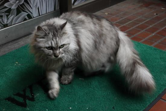 Cat   ・・・土曜のにゃんこ・・・_f0333031_05112775.jpg