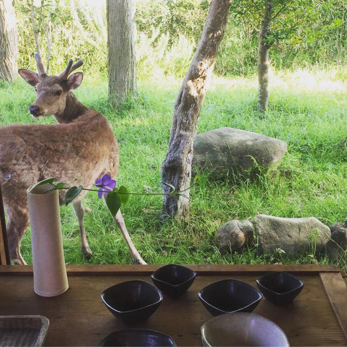 deer_d0210537_17171078.jpg