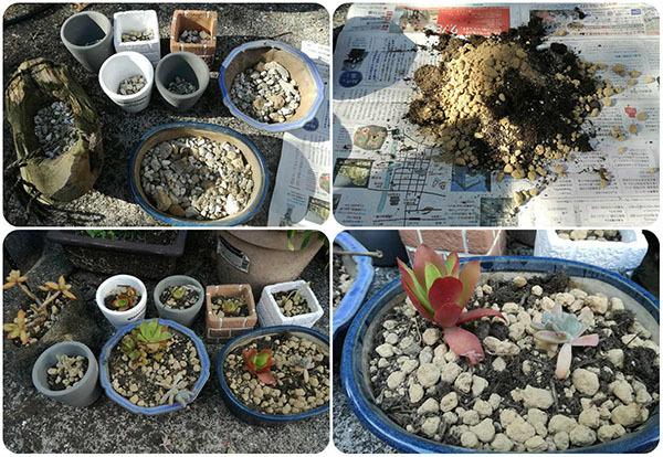 一気呵成に多肉植物の植え替えを終わらせました(最終章)_e0022047_21555132.jpg