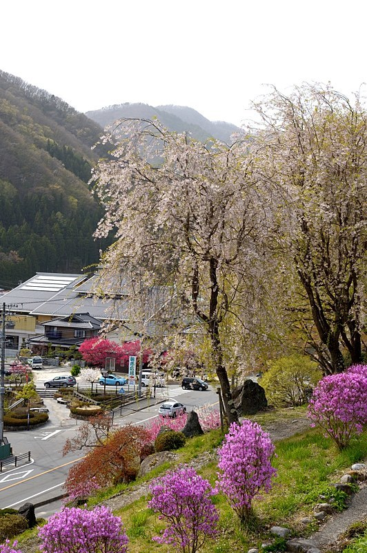駒つなぎの桜と昼神温泉へ_c0330563_22412736.jpg