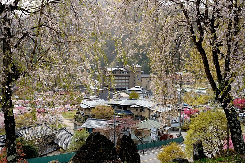 駒つなぎの桜と昼神温泉へ_c0330563_22414702.jpg