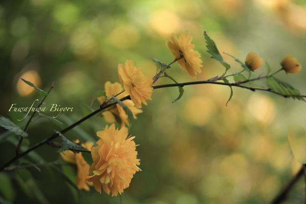 そっと咲く花たち**_d0344864_22052215.jpg