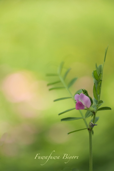 そっと咲く花たち**_d0344864_22053182.jpg