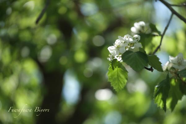 そっと咲く花たち**_d0344864_22053949.jpg