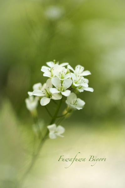 そっと咲く花たち**_d0344864_22060742.jpg