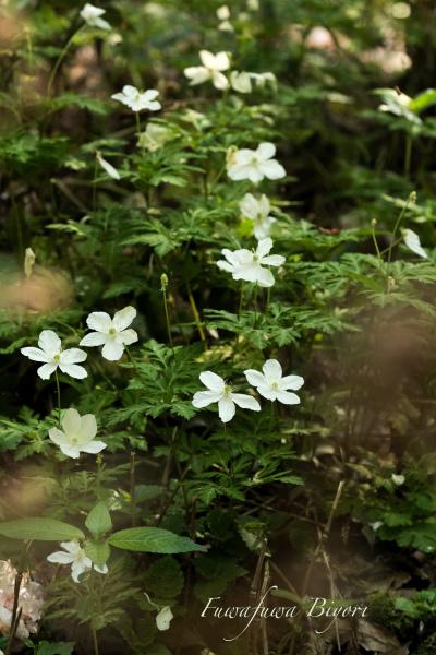 そっと咲く花たち**_d0344864_22062033.jpg