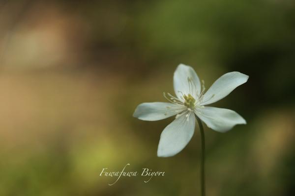 そっと咲く花たち**_d0344864_22062861.jpg