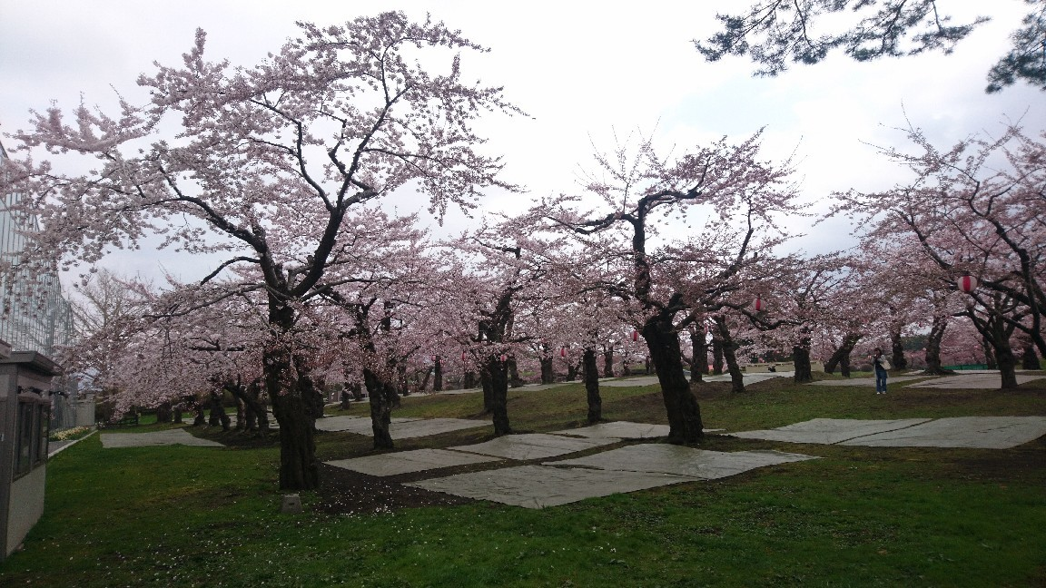 2018年4月28日(土)今朝の函館の天気と気温は。ゴールデンウィークはさくら咲く函館へ!_b0106766_05205985.jpg