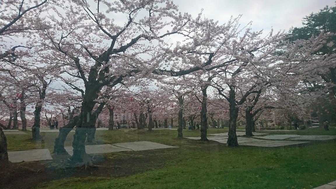 2018年4月28日(土)今朝の函館の天気と気温は。ゴールデンウィークはさくら咲く函館へ!_b0106766_05213816.jpg