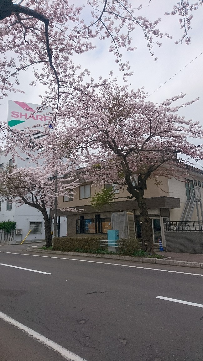 2018年4月28日(土)今朝の函館の天気と気温は。ゴールデンウィークはさくら咲く函館へ!_b0106766_05213893.jpg