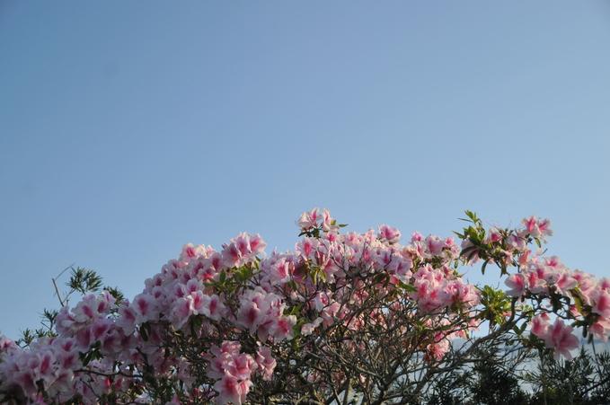 上千野観光体験果樹園(串間いちご畑) 180421 005_a0043276_2110225.jpg