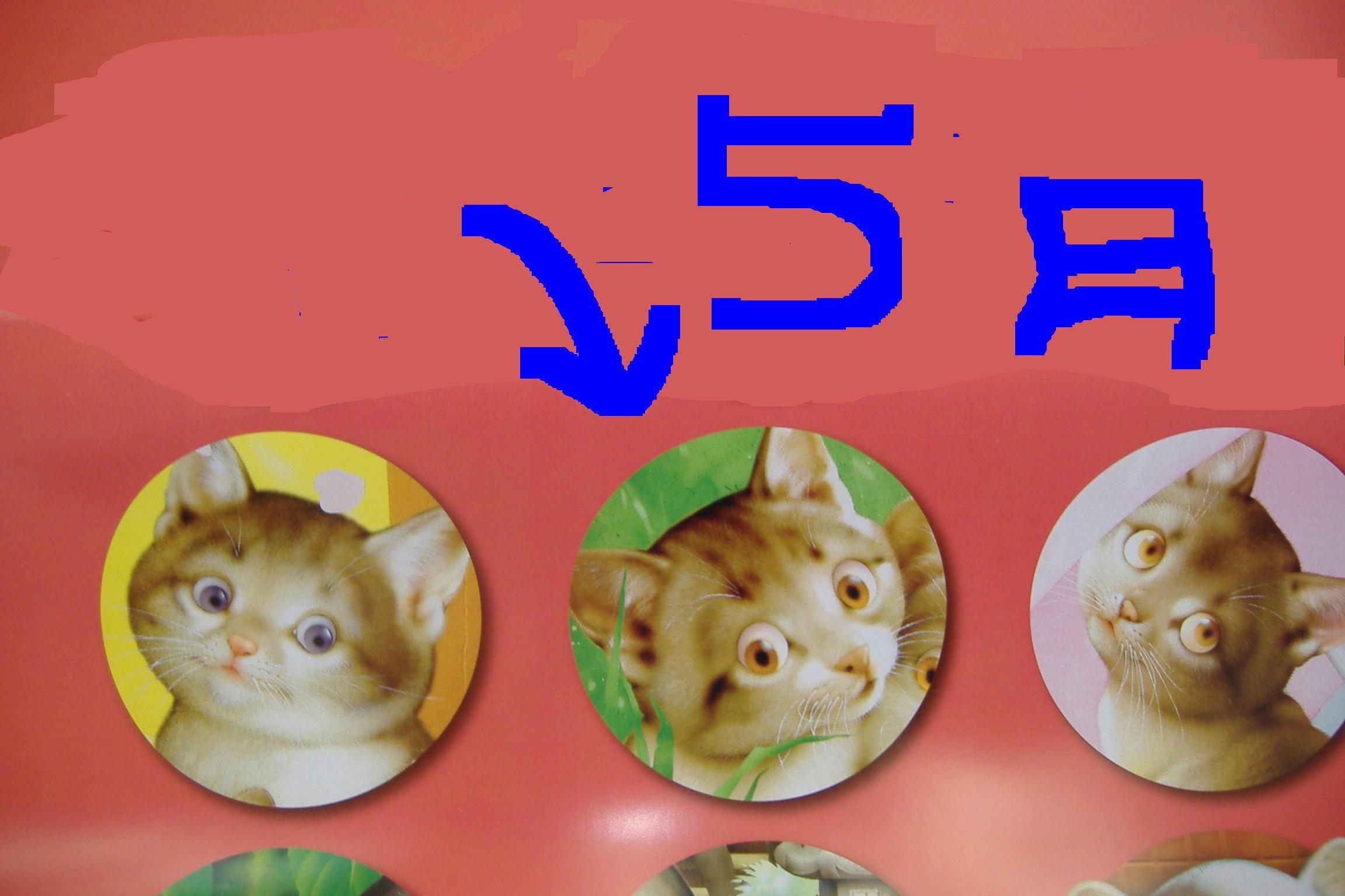 「 五 月 」・「 さ つ き 」・「 五 月 だ ぁ! 」_c0328479_16350266.jpg
