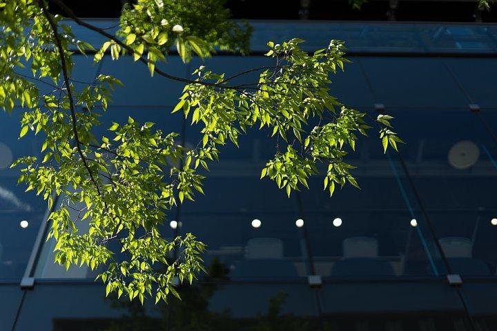 On Green Keyaki Street_d0353489_23003079.jpg