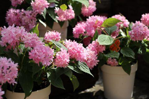 お花見ドライブ&ブランディビール_c0090198_1827454.jpg