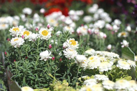お花見ドライブ&ブランディビール_c0090198_18302799.jpg
