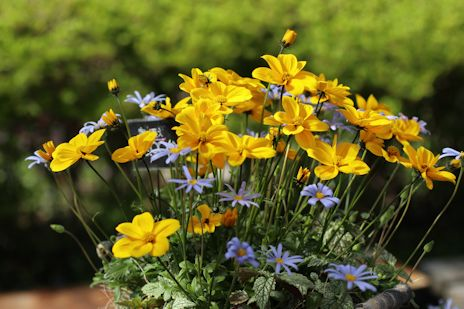 お花見ドライブ&ブランディビール_c0090198_18304242.jpg