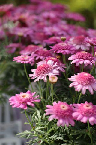 お花見ドライブ&ブランディビール_c0090198_18312495.jpg