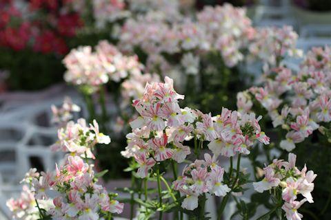 お花見ドライブ&ブランディビール_c0090198_1831386.jpg