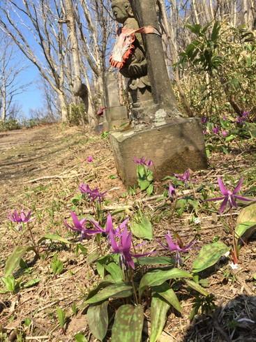 """2018年4月 『小樽赤岩の春の妖精たち』 April 2018 \""""Spring Fairies in Red Cliff, Otaru\""""_c0219616_14124760.jpg"""