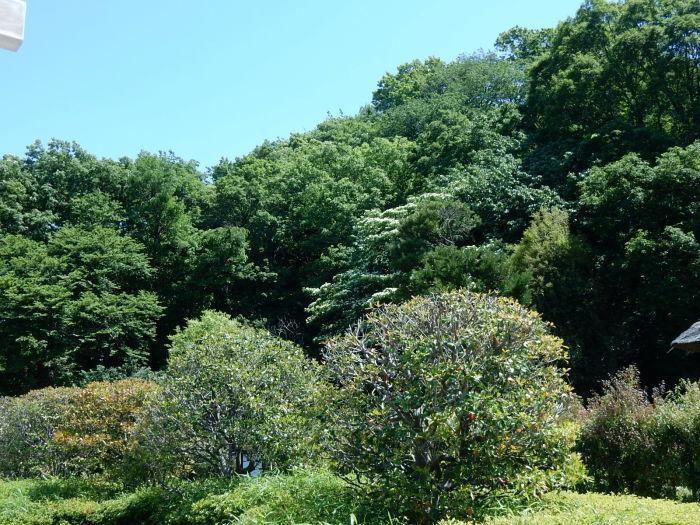 緑が濃くなった新緑の新林公園 2018_04_28_b0221219_21182943.jpg