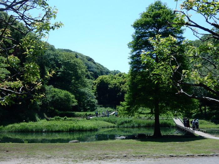 緑が濃くなった新緑の新林公園 2018_04_28_b0221219_21285603.jpg