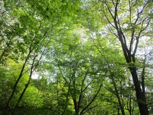 春夏(かえ歌・・・秋冬のメロディーで)  4月29日_d0127634_08041417.jpg
