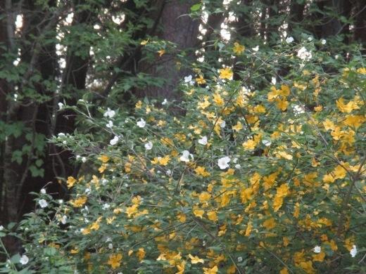 春夏(かえ歌・・・秋冬のメロディーで)  4月29日_d0127634_08225712.jpg