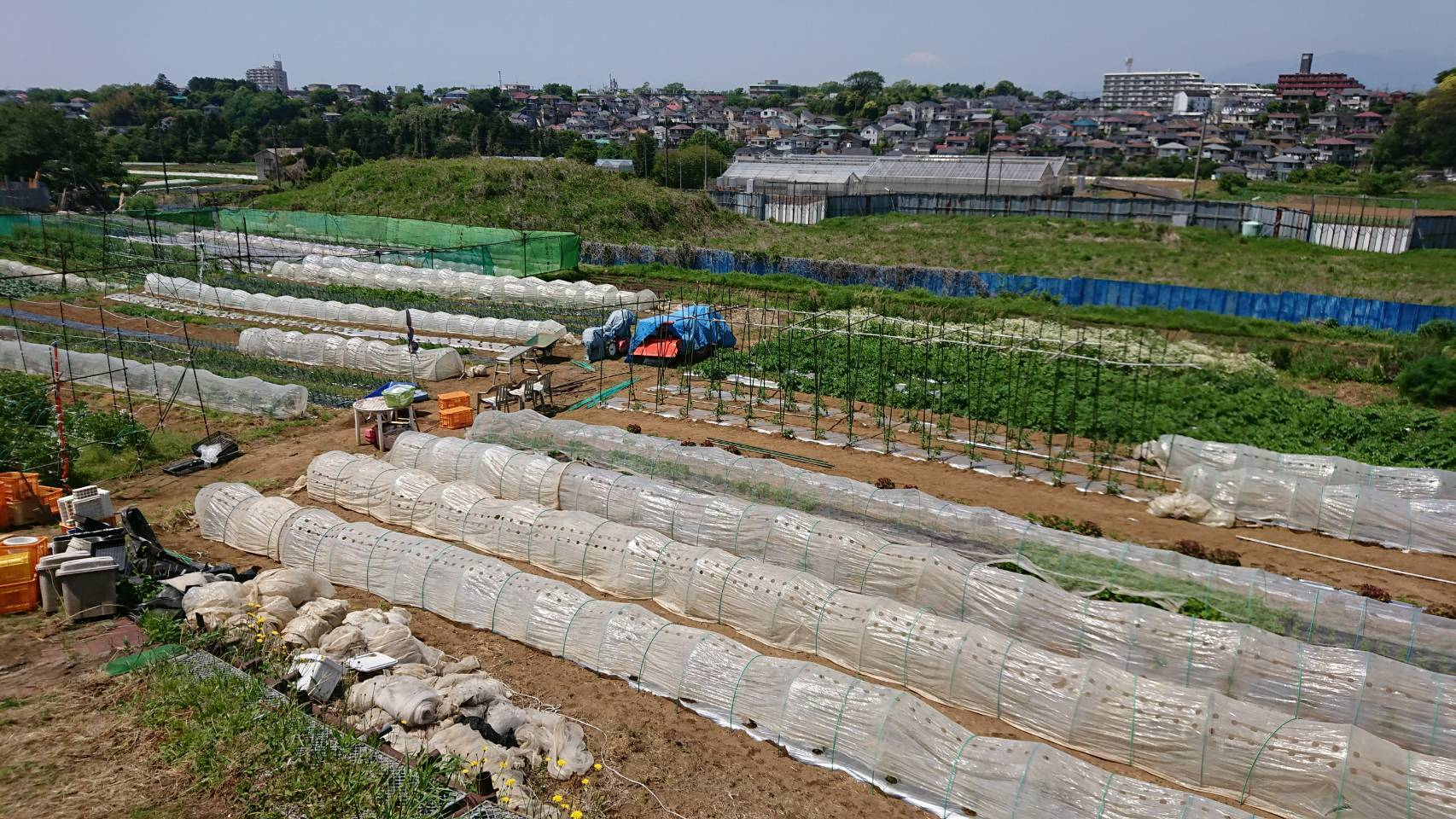 トマトの櫓建てと後発のトマトの定植_c0222448_12240702.jpg