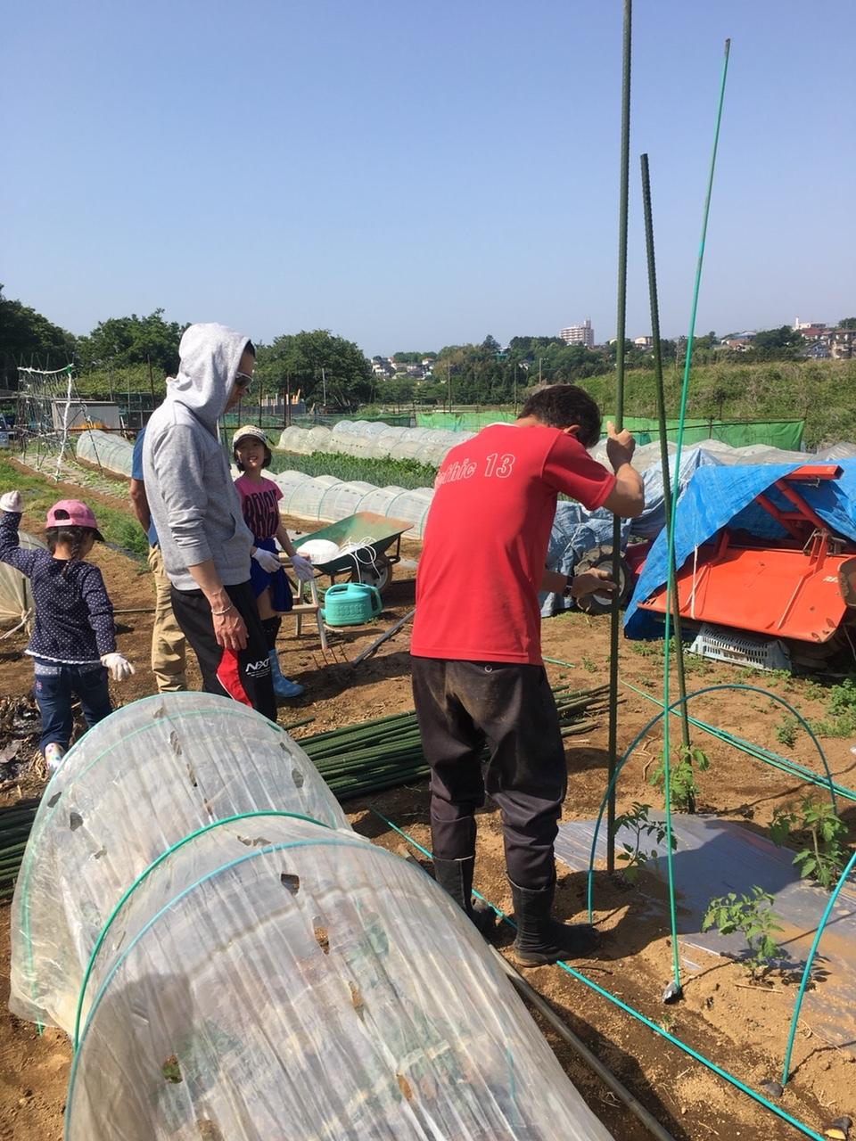 トマトの櫓建てと後発のトマトの定植_c0222448_12242749.jpg
