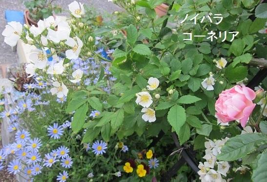 e0014154_20111414.jpg