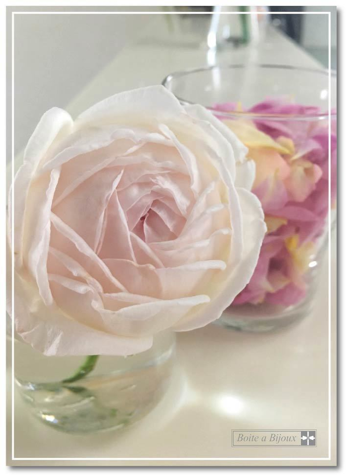 庭のバラたち_d0286255_19103873.jpg