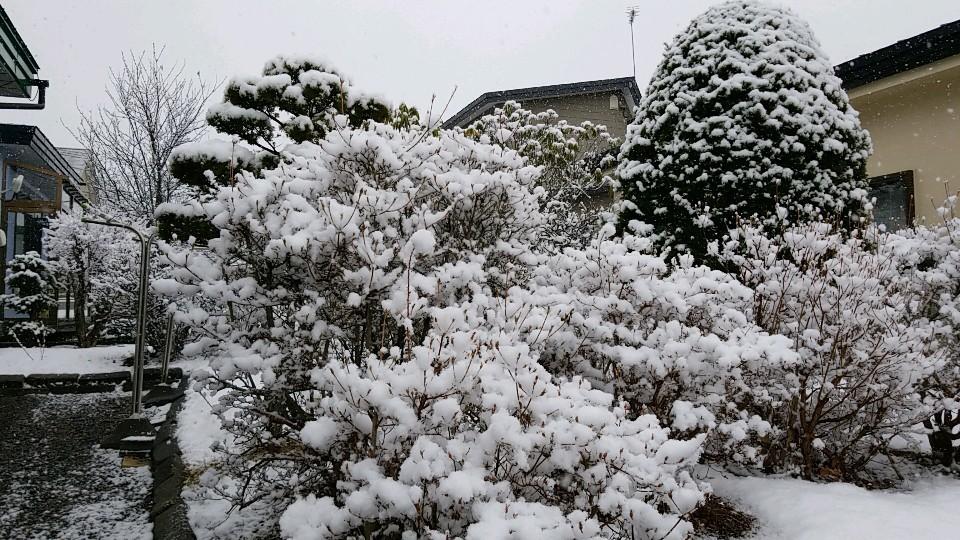 最近雪が_a0165694_23173762.jpg