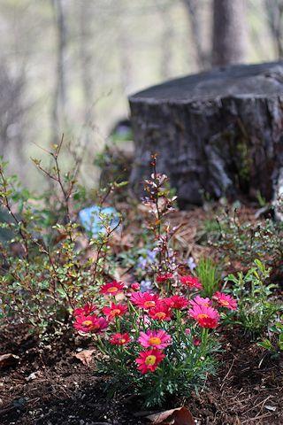 「から木」ディナー&我が家の裏庭_c0090198_2034337.jpg