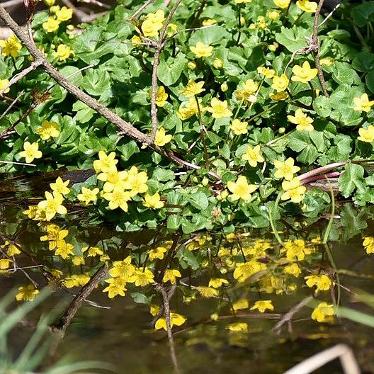 県北の高原にも春が来た_f0099102_10344311.jpg