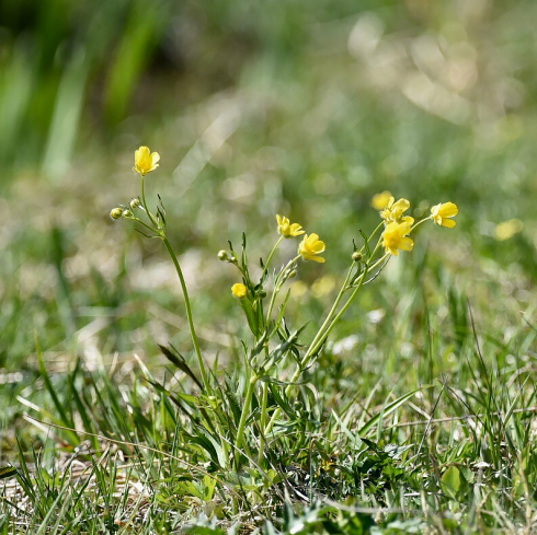 県北の高原にも春が来た_f0099102_10372355.jpg