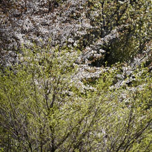 県北の高原にも春が来た_f0099102_10415593.jpg