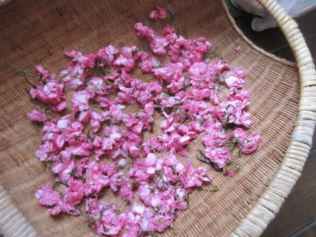 桜を漬ける、高菜を漬ける_a0203003_10215475.jpg