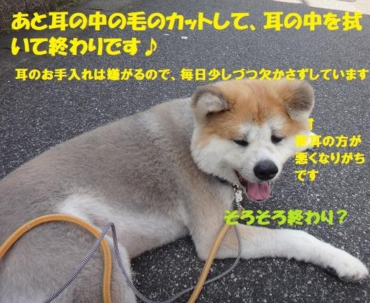 f0121712_14470270.jpg